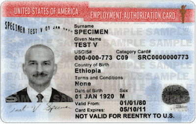 Employment Authorization